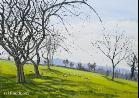 The Rod Jones Online Gallery - E esbatch Orchard Acrylic